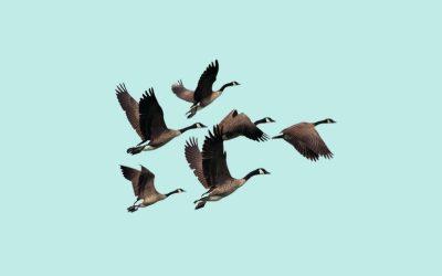 Goose Spirit Animal